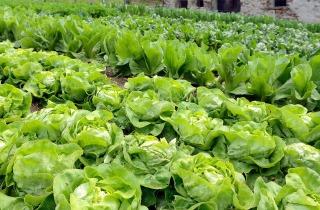 La nostra verdura, a...